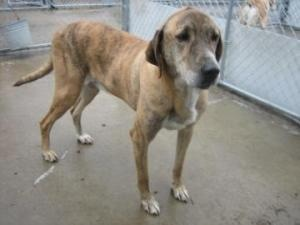 kirk is an adoptable Hound Dog in Raeford, NC. To learn more about Friends for Life at The Haven, please visit the Havens Petfinder Website If you would like to adopt this pet or see the hundreds of ...