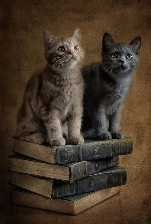 Cats and books, perfect!