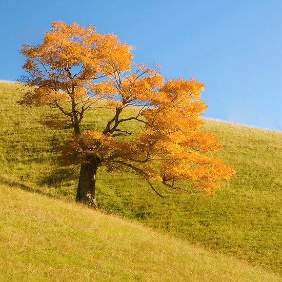 ~~ Appalachian Oak ~~