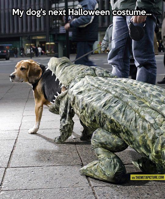 My dog's next Halloween costume...
