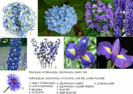 List of flowers by color