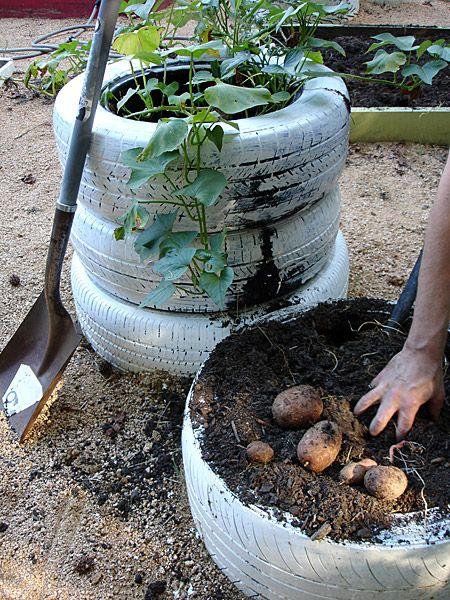 Кула за картофи от… стари автомобилни гуми