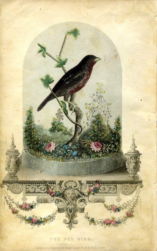 Vintage Ephemera ~ Bird in Cloche