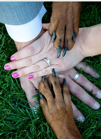 Ring shot with your dogs!