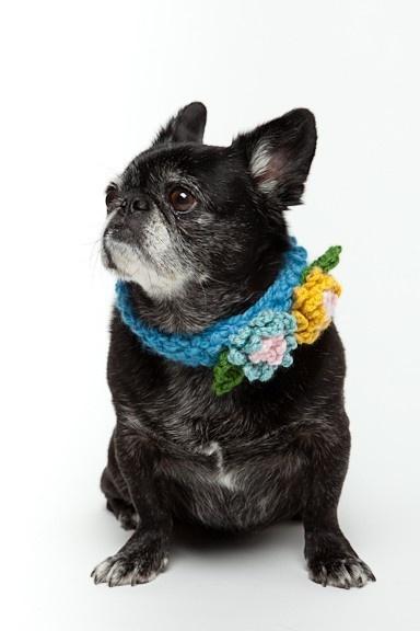 Floral Crochet Dog Collar.