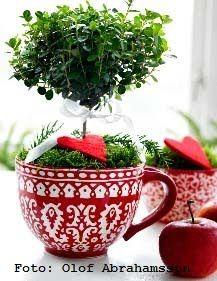 Christmas topiary ?