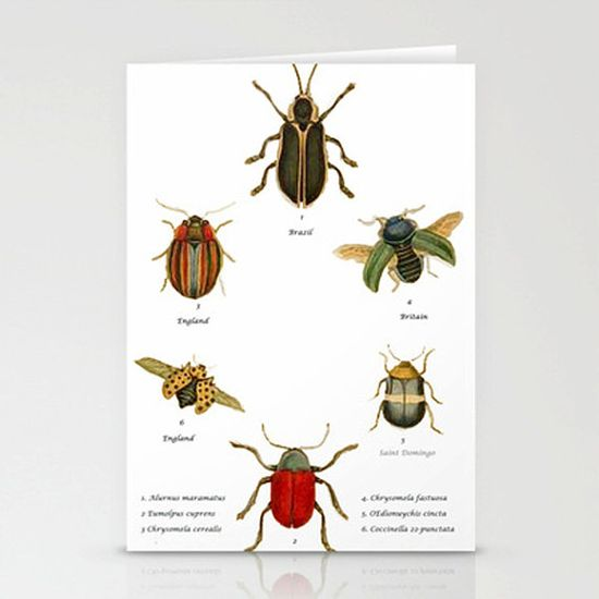 Greetings Card Hand made Illustrated. Insects by modestly on Etsy, £2.80