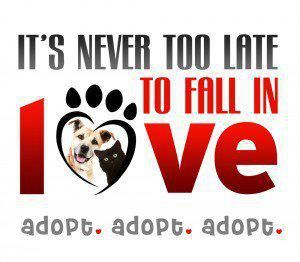 : )  It's NEVER too late to fall in LOVE.  adopt.  adopt.  adopt!