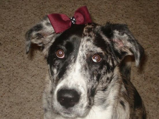 Go GAMECOCKS!!! My baby dog is on Pinterest!