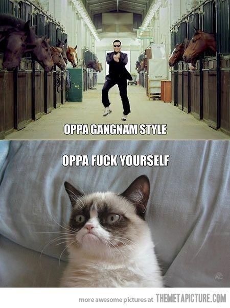 Omg I love this cat