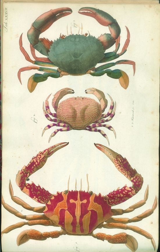 late 1700's crustacean atlas.