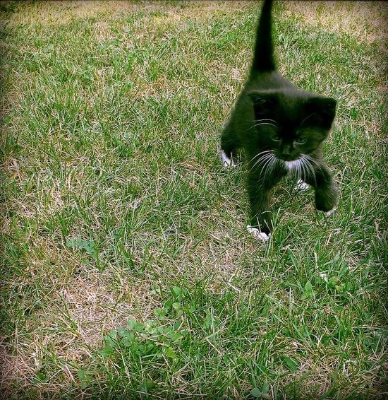 kitten stomp.