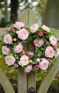 Beautiful David Austen Roses...