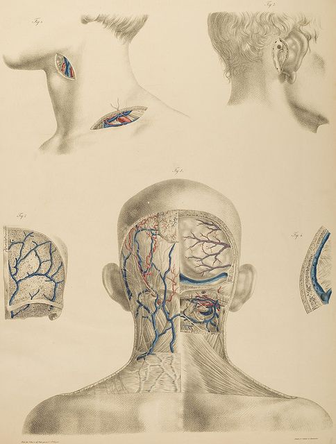 Surgical-Anatomical Tables by Anton Nuhn, 1846 by Double--M, via Flickr.