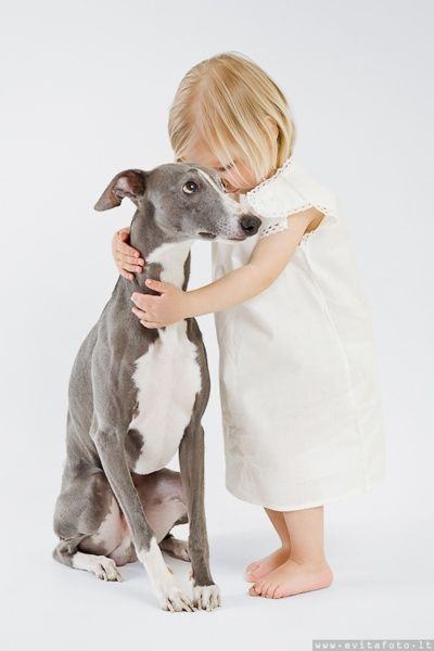 Does it get any cuter?  Little girl with adorable whippet.  #dog