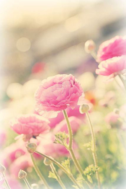 flower fields by lucia and mapp, via Flickr