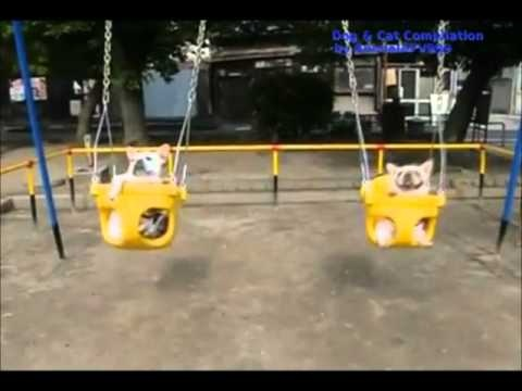 Funny Dogs Video Clips - Part 9