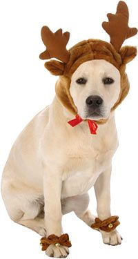 Reindeer Dog Costume - our dog needs this!