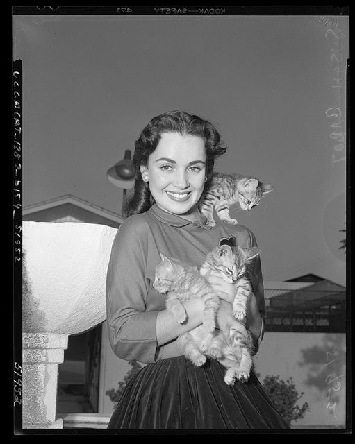 Lovely actress Susan Cabot and three immensely cute little feline friends in 1950. #vintage #actress #Hollywood #cats #kittens #cute #1950s #fifties #Susan_Cabot