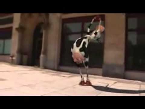 funny animal video 30 -