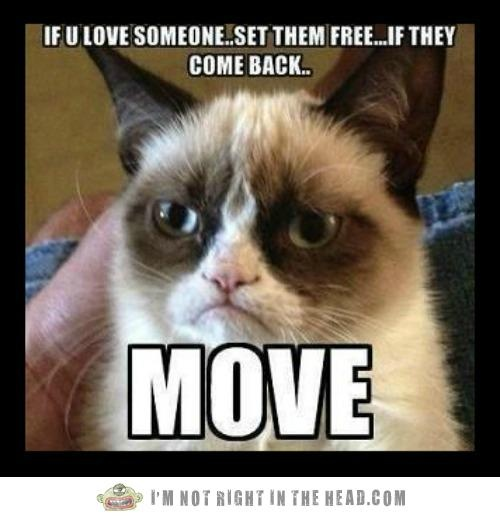 Grumpy Cat - If you love someone... set them free