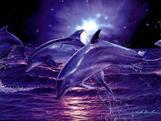 3D Digital Dolphins