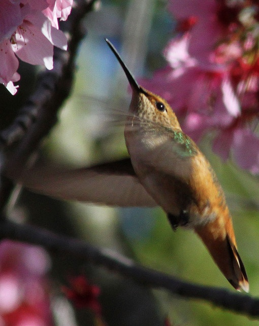 ?Amazed?~   Hummingbird by UNTIL THEN..beautiful close up shot