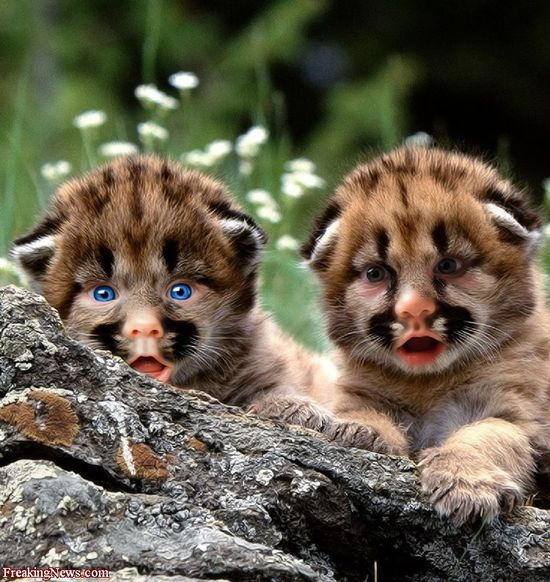baby animals images
