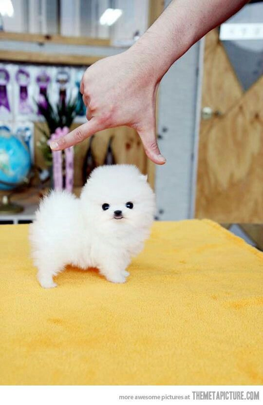 Must. Have. Baby dog.