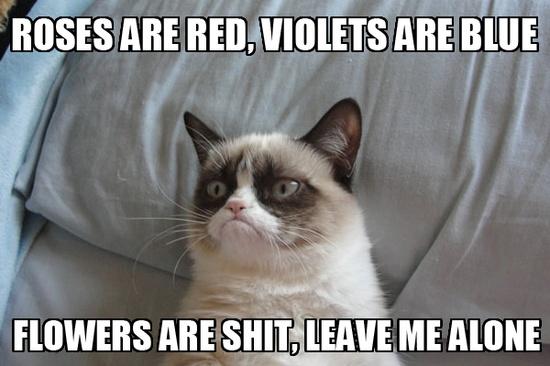 #Valentine #grumpycat #grumpy #tard #cats #kittens #animals #pets #funny #cute Pet Insurance for Dogs and Cats in Australia - www.kangabulletin... #pet #insurance #australia #price pet insurance qld and pet insurance best rated