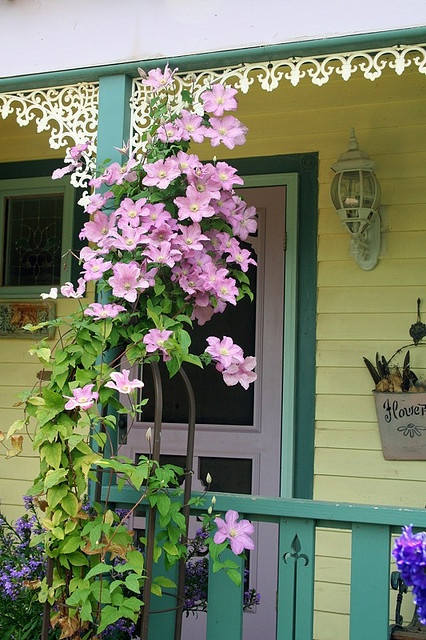 Porch Clematis, I need to add some character to my front porch!