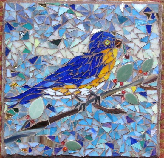 bluebird  www.flickr.com/ph...