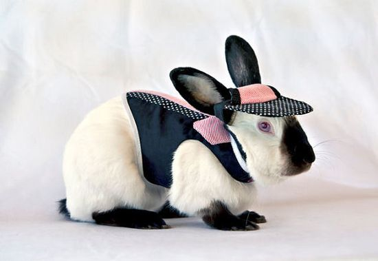 Trendy shirt harness for your pet boy rabbit by turvytopsy on Etsy,
