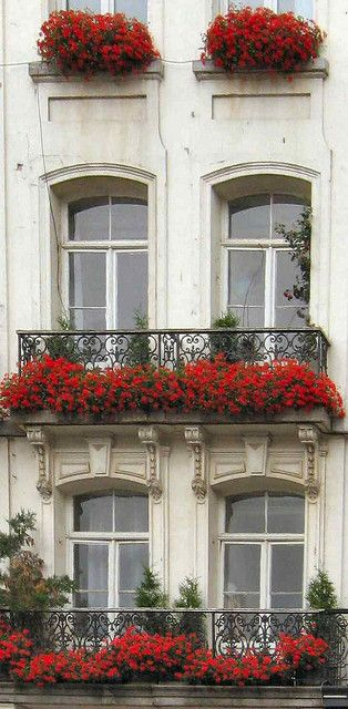 Window flower boxes with red flowers and balconies.