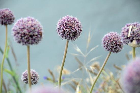 #purple #flowers #photography