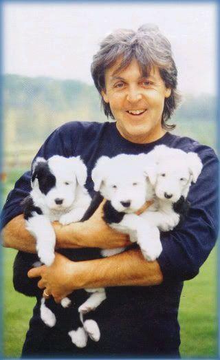 Paul McCartney  #celebrities #dogs #pets