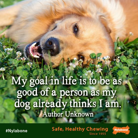 """""""My goal in life is to be as good of a person as my dog already thinks I am."""" ~ Unknown Courtesy of www.nylabone.com #dogs #pets #quotes"""