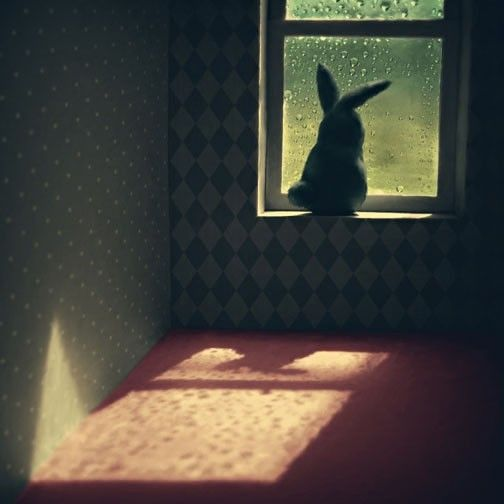 Window bunny.