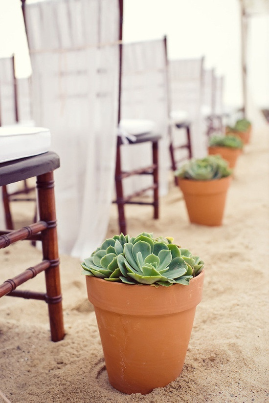 Potted succulents in the aisle of this beach wedding. Love the gauzy chair covers.   Photography by klkphotography.com, Event Coordination, Floral and Event Design by thedazzlingdetail...