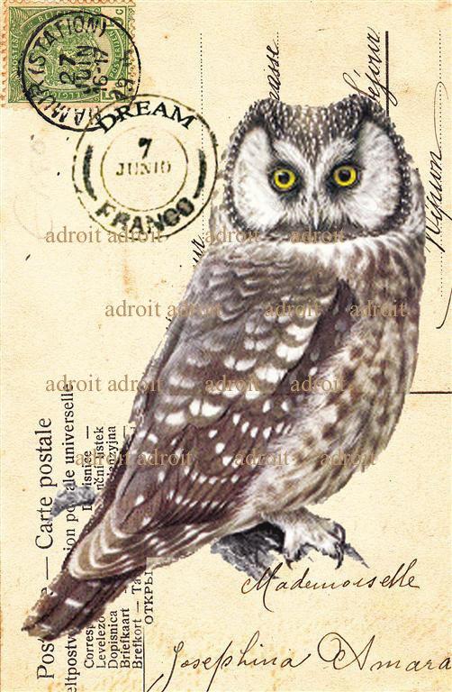 """owl"" mail art postcard by Louis Adroit"