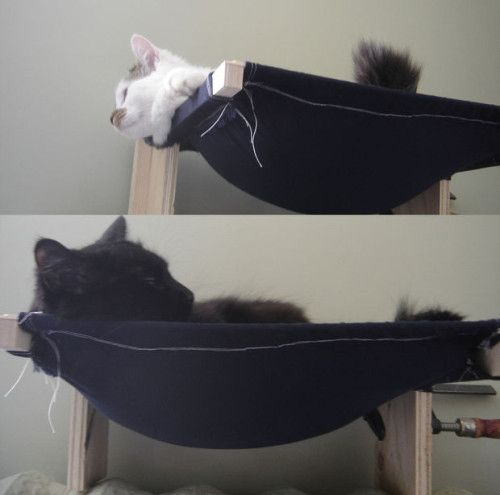 DIY Pets: Build a Cat Hammock