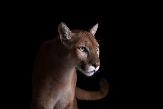 studio portraits of wild animals