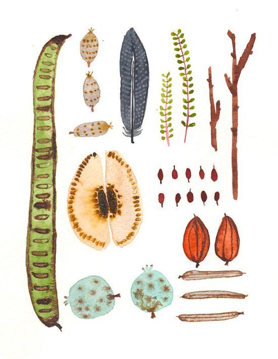 Collecting Nature- Natural Home Decor-Indoor Garden Botanical-orginal watercolor- botanical art