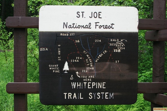 Bike & hike around the Giant White Pine Campground. A Forest Service Map is recommended.