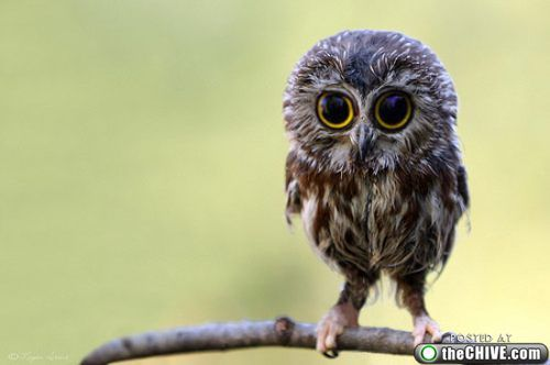 Oh my goodness!! A baby owl