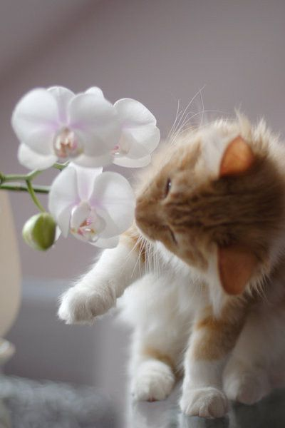 Adorable kitten with flowers ? #adorable #cute #kitten #flowers