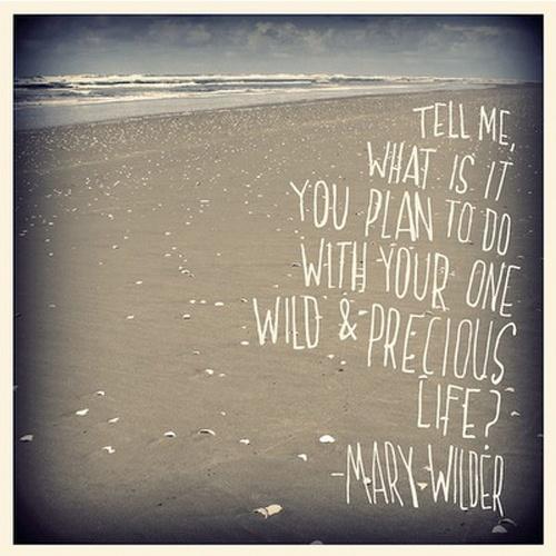 your one wild & precious life
