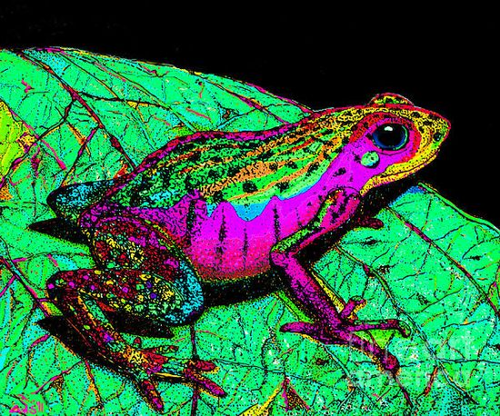 A rainbow colored frog on a leaf #froglovers #frogs #toads #adorable #animals