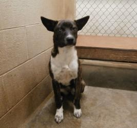 OHIO ~ re-pinned 10/31 ~URGENT!!!!!!!!! ID # 40191 is an adoptable Akita Dog in Ironton, OH. Available for a limited time from the Lawrence County Dog Pound, 1302 Adams Lane Ironton, OH 45638. Please call the dog warden at 7...