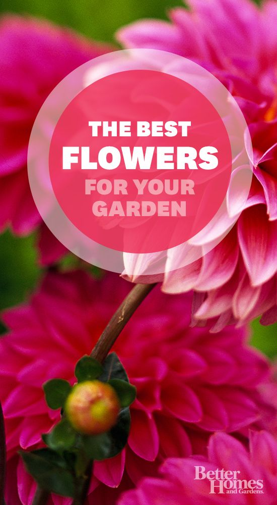 Everything you need to know about growing flowers in your garden: www.bhg.com/...